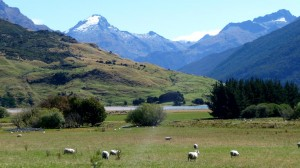 Sheep and Mountains in New Zealand