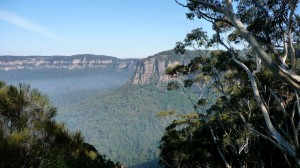 Huge Forest, in the Blue Mountains, Australia