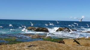 Seagulls in Sydney, Australia