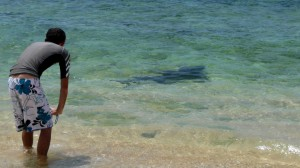 The shark is our friend, Kinde Island, Nouvelle Calédonie