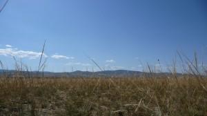 Mongolian steppes 1