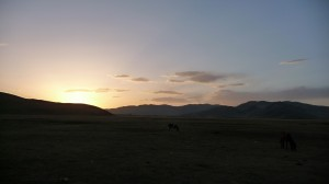 Sunset on the steppes, with horses