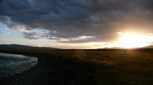 Sunset on the steppes with Yak, in Mongolia