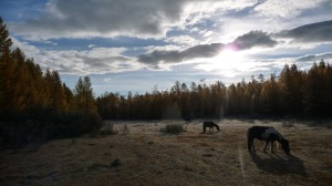 Horse and forest, Khovsgol Nuur, 2