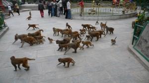 Monkeys in Swayambhunath Temple, Kathmandu, 6