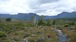 After the rain, Overland Track, Tasmania