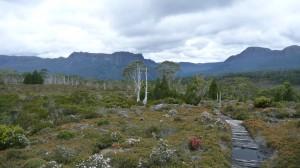 After the rain, Overland Track, Tasmania