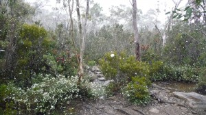 Snow on the Overland Track, Tasmania