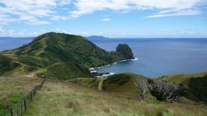 Inland track, Coromandel, New Zealand