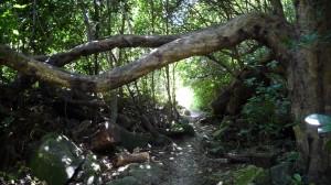 Forest, Coromandel, New Zealand