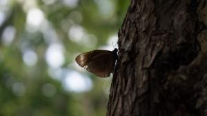 Butterfly, Namua Island, Samoa